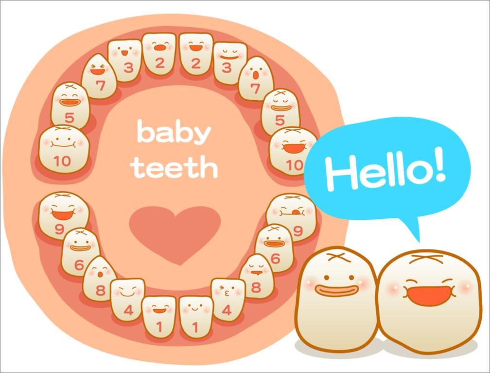 melkgebit welke tandjes eerst